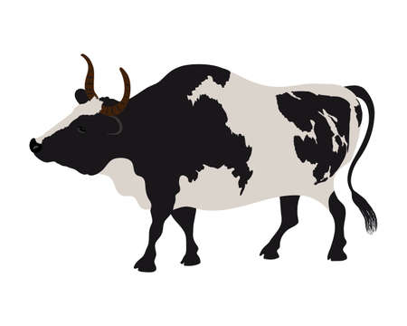 Vector cow in realistic style on a white background. Black and white cow.