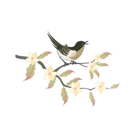 Nightingale bird with magnolia branch in oriental style isolated on a white background