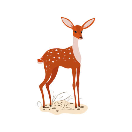 Orange baby deer with white spots stands in the meadow Ilustração