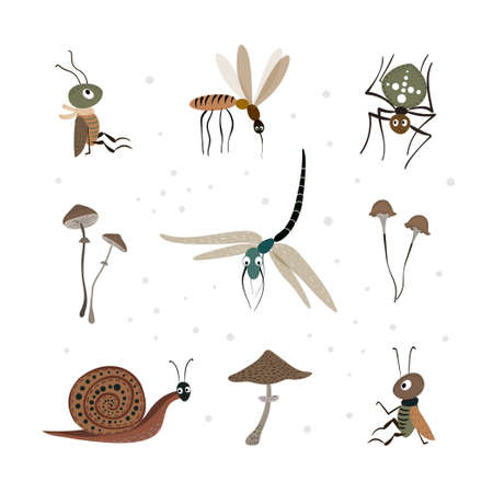 vector set with insects and mushrooms isolated on a white background. Spider, dragonfly and other.