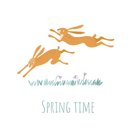 Two red hares are running through the fields. Fun rabbits. Spring time.