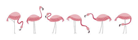 Vector set with six flamingos. Flamingos stand isolated on a white background. Hand drawn illustration.