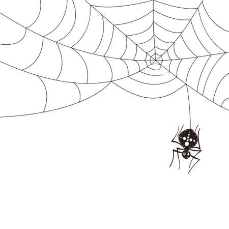 Spider hanging from the web. Black web isolated on a white background. Halloween scene.