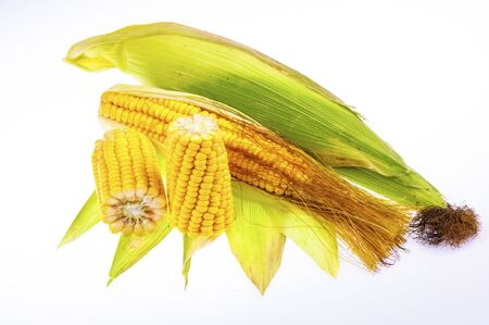 Ripe corn on the cob on a white background