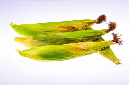 Unpeeled Corn on the Cob on a White Background