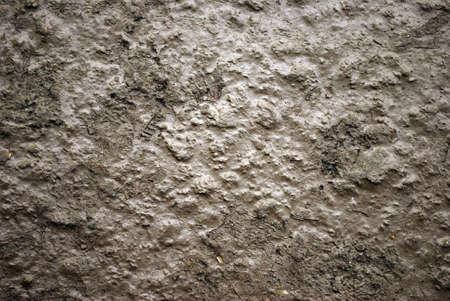 ooze: Mud