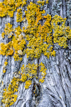 mosses: Mosses on a trunk in a forest Stock Photo