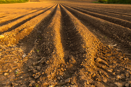 furrow: This ploughed field is on the south side of Ilminster, Somerset, England, United Kingdom Stock Photo