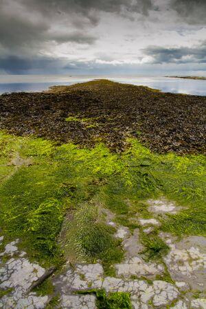 kimmeridge: Coast, seaweed and sky. This is a Kimmeridge Bay, Dorset, England, United Kingdom