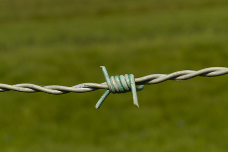 bobbed: Barbed wire, barb wire, bobbed wire bob wire, close up macro of barb with green background