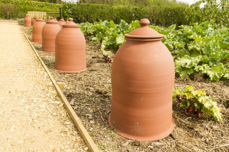 Forcing pots for rhubarb, Rheum rhabarbarum, made from Terracotta Stock Photo - 29725784