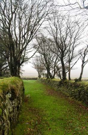 dry stone: Green path with dry stone walls on Autumn fall misty day. Dartmoor National Park, Devon, England, United Kingdom. Stock Photo