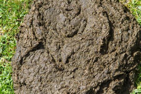 muck: Fresh  cowpat in British field