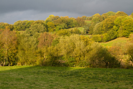 hedges: Pastoral fields and hedges. Powys Wales. Low sunlight green peaceful Stock Photo