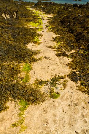 air bladder: Path of sand between seaweed covered rocks on beach