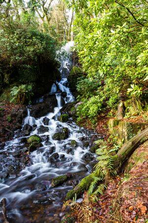 Stream falling through moss and trees, Autumn Fall. United Kingdom, Europe.