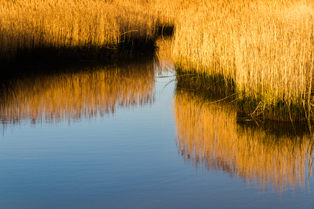 Reeds and water channel. Stanpit Marsh, Christchurch, Dorset, England, UK 写真素材