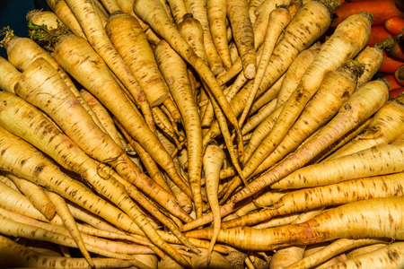 Display or raw horseradish root