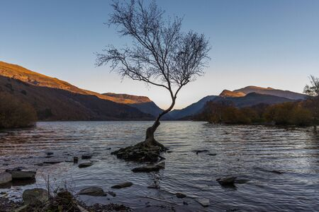 Lone Tree in Lake Padarn with Snowdonia Welsh mountains in the background, Llanberis, Autumn or fall evening Imagens