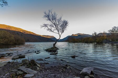 Lone Tree in Lake Padarn with Snowdonia Welsh mountains in the background, llanberis