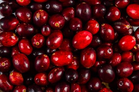 Background consisting of fresh whole cranberries Imagens