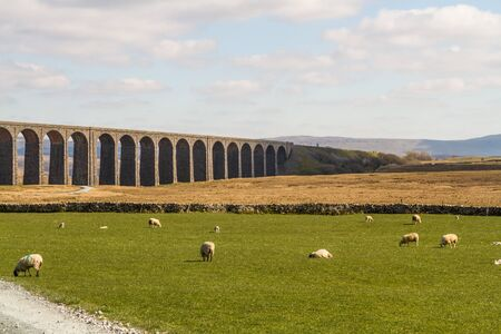 Sheep in foreground of the the Ribblehead Viaduct, landscape. North Yorkshire, Europe, England, landscape. Фото со стока