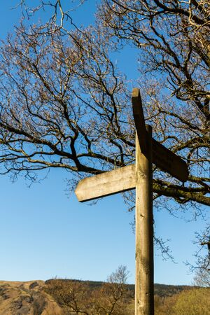 Finger post with blank panel. Against blue sky and tree