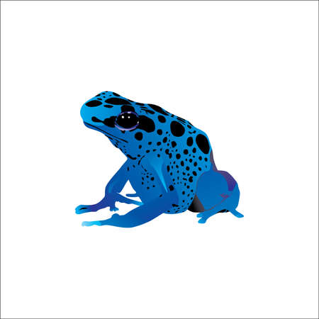 Frog vector for your business