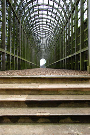 twining: Green tunnel with plants twining the lattice walls