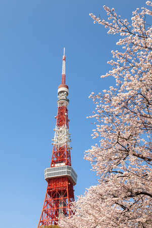 Tokyo Tower with cherry blossoms Éditoriale