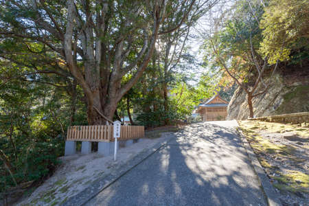 Chiba Prefecture Tateyama Awa shrine sacred tree 写真素材 - 118865564