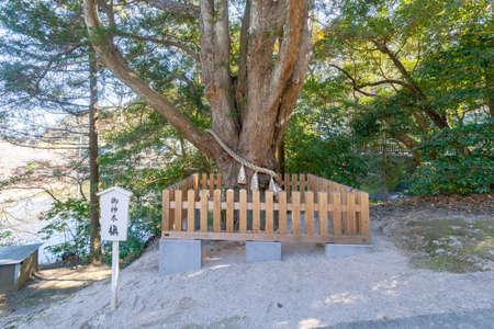 Chiba Prefecture Tateyama Awa shrine sacred tree