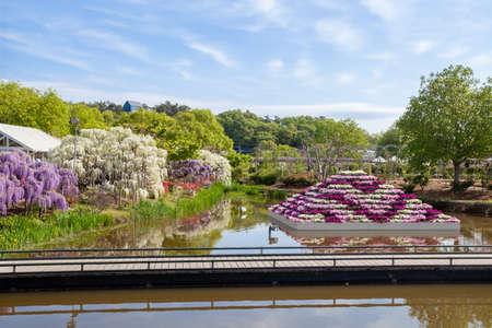 Ashikaga flower park. 写真素材 - 122514760