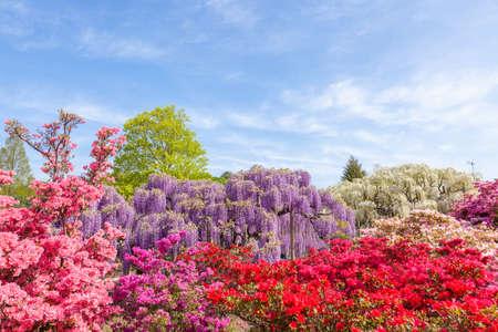 Parque de flores Ashikaga.