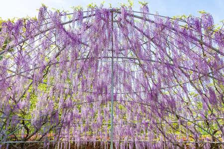 Ashikaga flower park.
