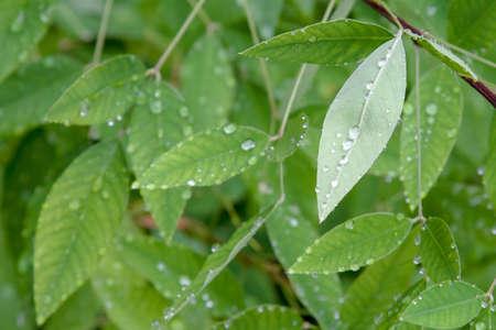 Image of the rainy season in June