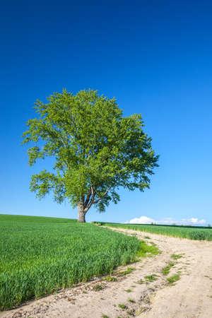 Hokkaido Biei Philosophy Tree 写真素材