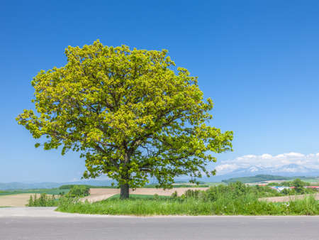 Seven star tree