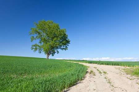 Hokkaido Biei Philosophy Tree