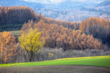 Hokkaido Biei in Autumn