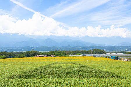 Himawari Field in Akino, Hokuto City, Yamanashi Prefecture 2019