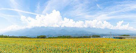 Sunflower Field Panorama in Akino, Hokuto City, Yamanashi Prefecture 写真素材