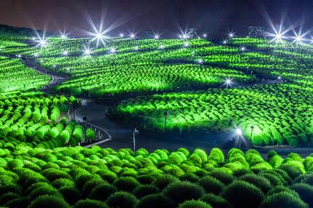 Hitachi Seaside Park Kokia Light Up 写真素材