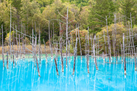 Blue Pond Hokkaido Biei