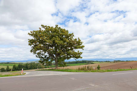 Hokkaido Biei Seven Star Tree on Patchwork Hill 写真素材
