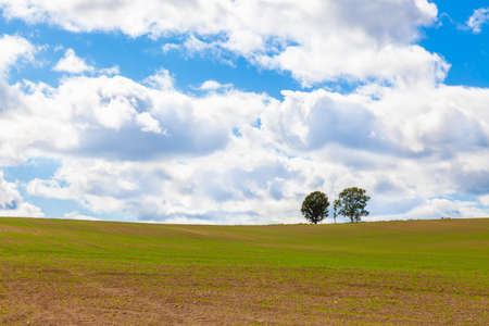 A parent and child tree on a patchwork hill in Biei, Hokkaido