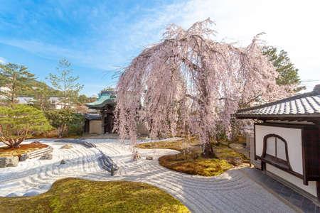 Kyoto Kodaiji Gion Weeping Cherry Blossoms