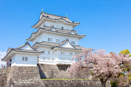 Odawara Castle and cherry blossoms in full bloom