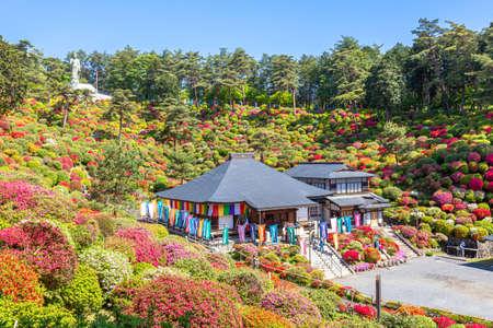 Shiofune Kannonji Temple and Azalea in full bloom