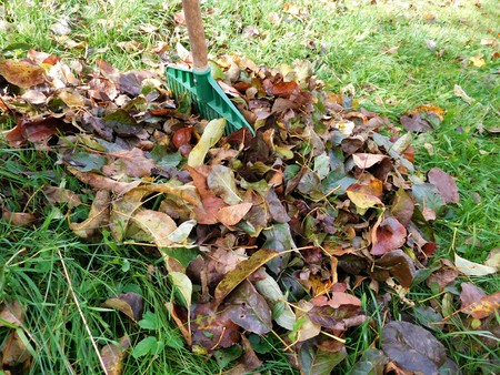 clutter: The autumn leaves in green grass